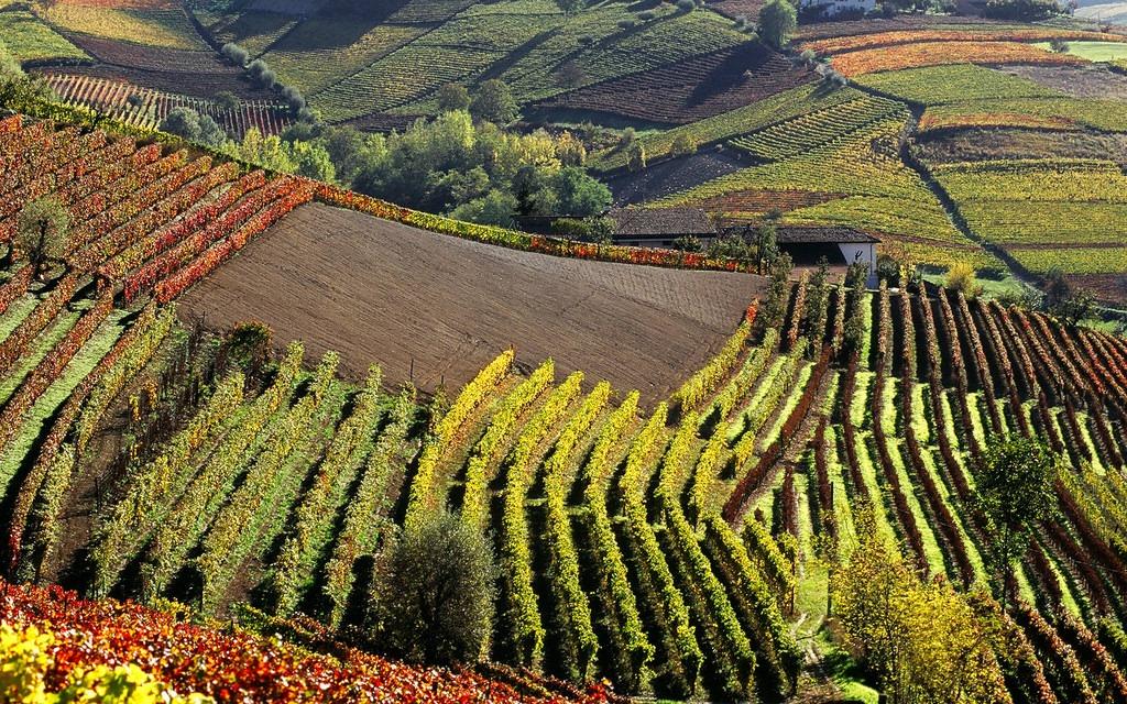 Gastronomix-Canavese-Monferrato